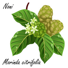 2 noni fruit